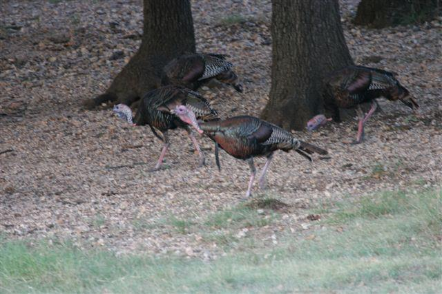 Time for Turkeys